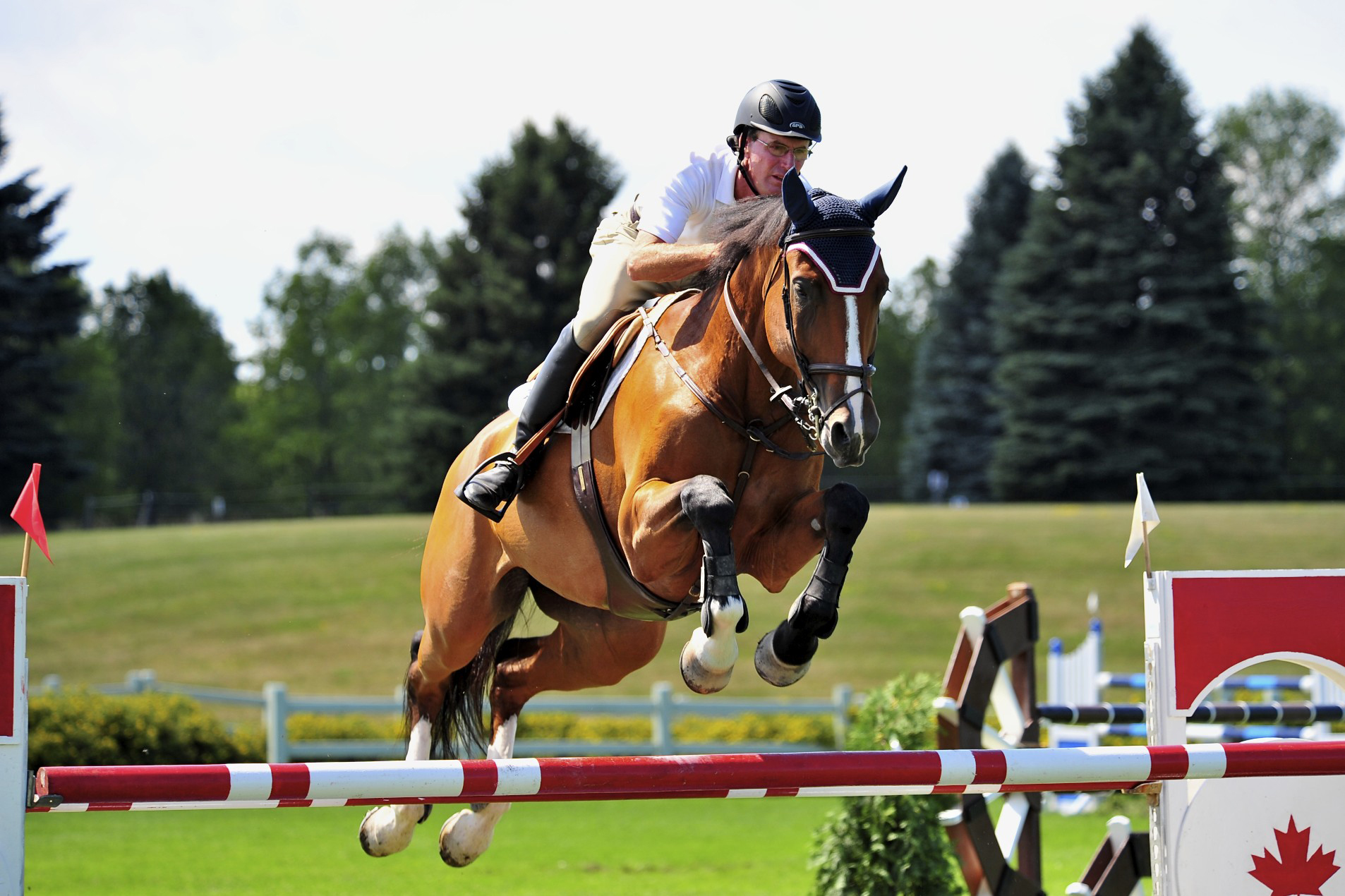 young horses featured at national capital show jumping tournaments
